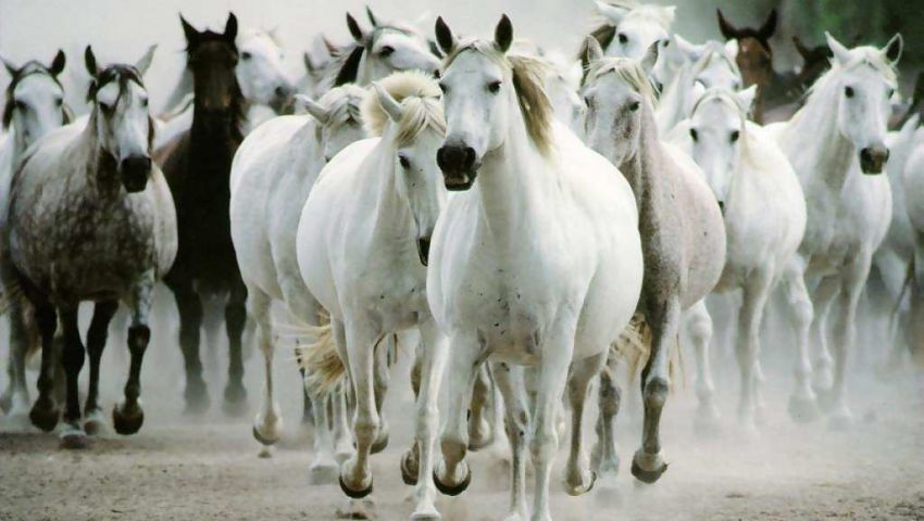 دراسة: الخيول بدأت في الظهور قبل 4 ملايين سنة
