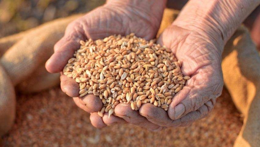 التموين: احتياطي القمح يكفي حتى أوائل مايو المقبل