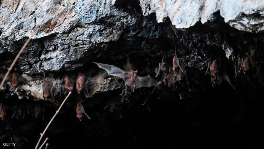 فيديو| تحمل 6 أنواع قاتلة من كورونا.. هل تنهي الخفافيش حياة البشر؟