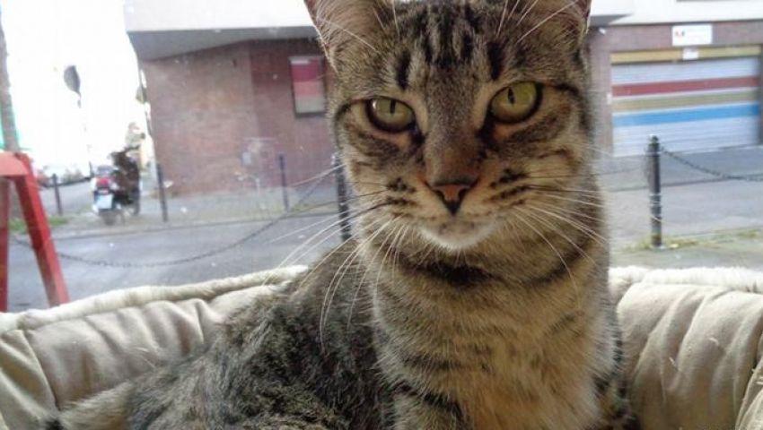 فضلات قطة تتسبب في تسرب إشعاعي