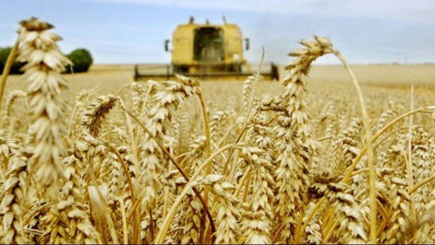 مصر تشتري 180 ألف طن من القمح الروسي والروماني