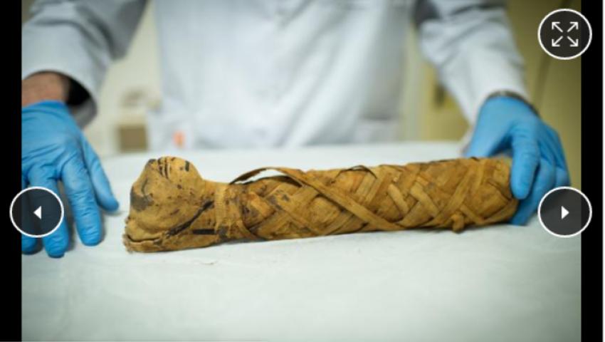 مومياوات القطط بـ«مصر القديمة».. أول عملية احتيال في التاريخ