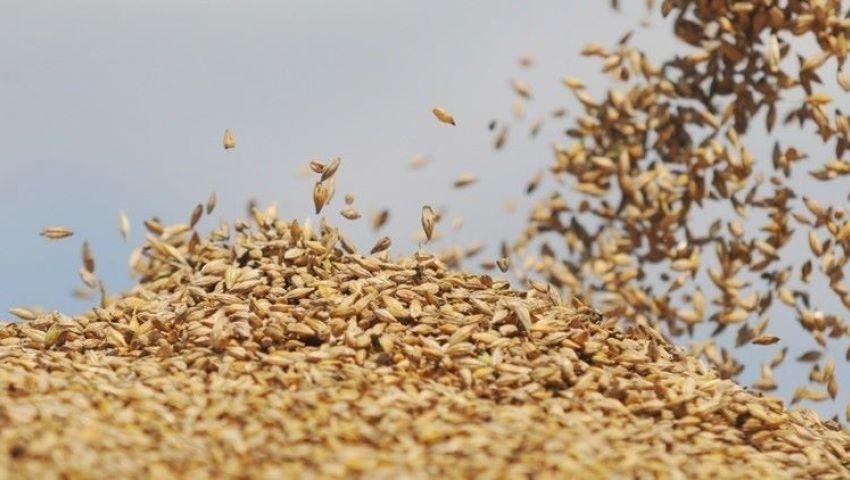 بسبب الانفجار النووي.. توصية بفحص شحنات القمح والحبوب المستوردة من روسيا