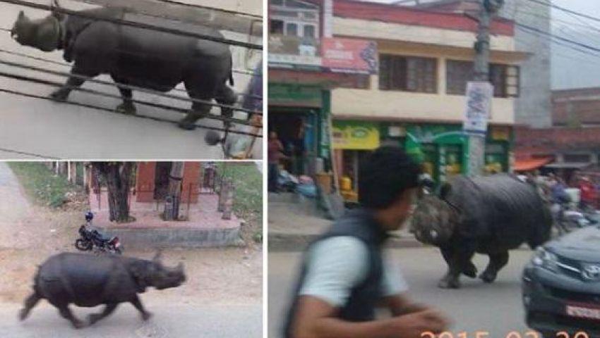 بالفيديو: وحيد قرن يقتل سيدة بنيبال بعد اقتحامه سوقًا