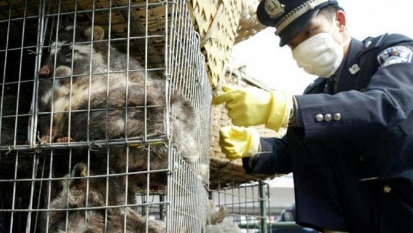 بينها الأكل والصيد.. حظر كامل لـ 4 تعاملات مع الحيوانات البرية في «بؤرة كورونا»