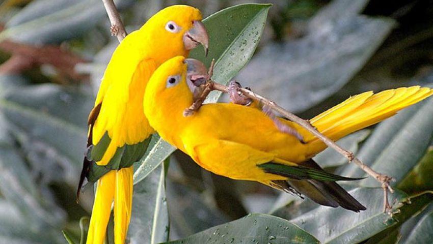عصافير تغني وترقص