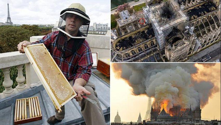 بالصور  200 ألف نحلة تعيش على سطح نوتردام تنجو من الحريق