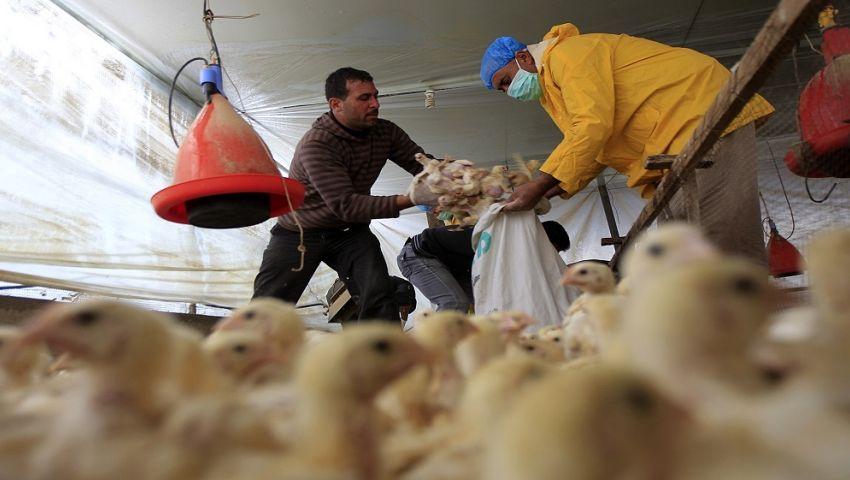 الصحة: وفاة حالة مصابة بأنفلونزا الطيور في الدقهلية
