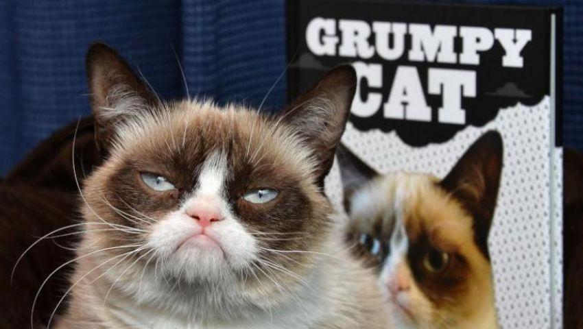 رحيل جرامبي كات.. أشهر قطة غاضبة على الإنترنت