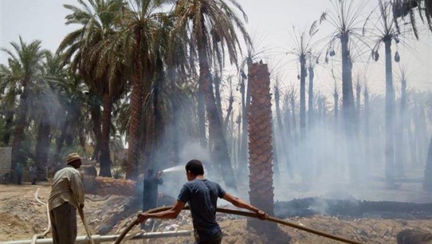 حريق ضخم بالوادي الجديد يسفر في نفوق طيور وتفحم حظائر ماشية