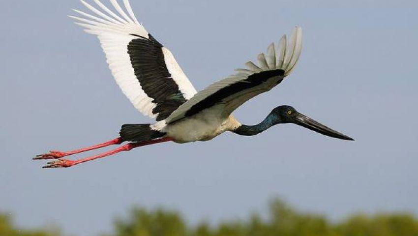 صياد ينهي حياة طائر التجسس