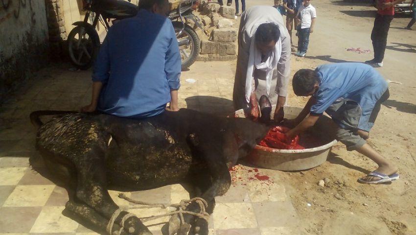 استعدادًا للعيد.. تعرف على أسعار لحوم الأضاحي في شمال سيناء