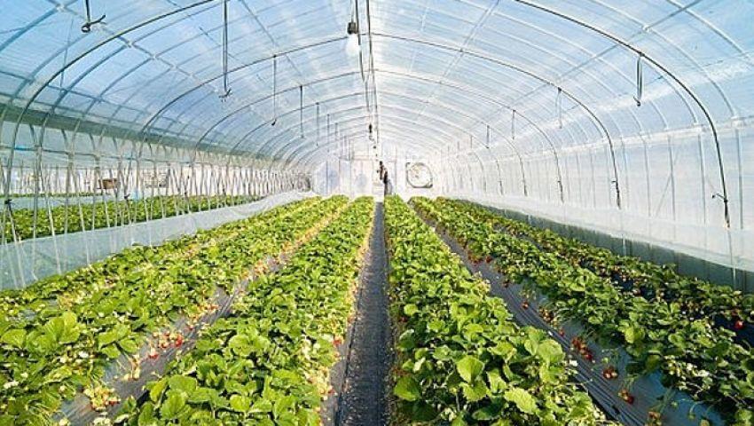 شينخوا: بالصوبات الزراعية.. مصر توفر المياه وتحقق الأمن الغذائي