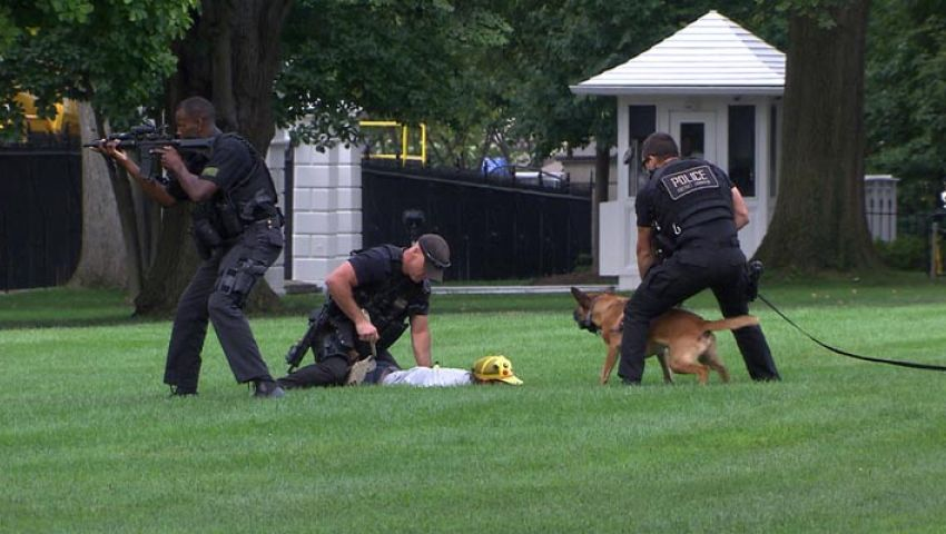 بالفيديو..رجل يقتحم البيت الابيض والكلاب تقبض عليه