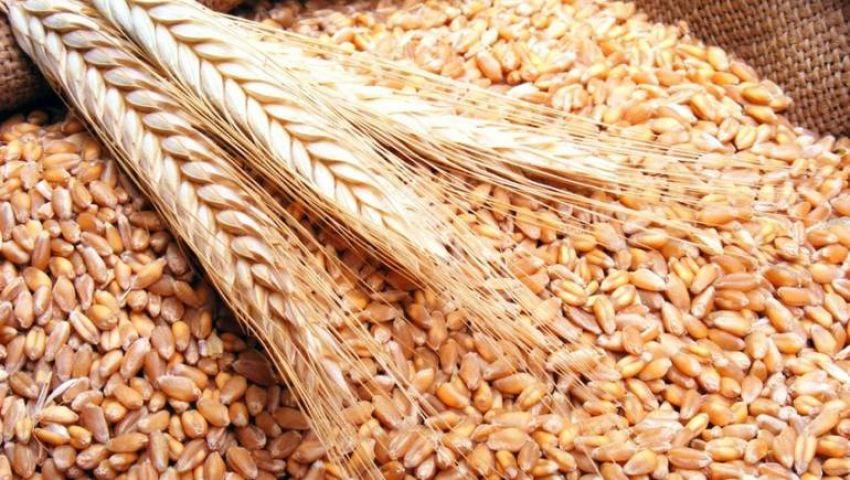 مصر تطلب سداد مقابل الحبوب خلال 180 يومًا بدلاً من السداد الفوري