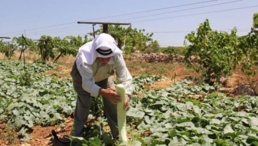 اتهامات للاحتلال بتدمير المزروعات الفلسطينية بـ«مبيدات كيماوية»