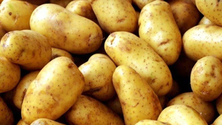 شينخوا: بشرى لمزارعي البطاطس الصينية في مصر