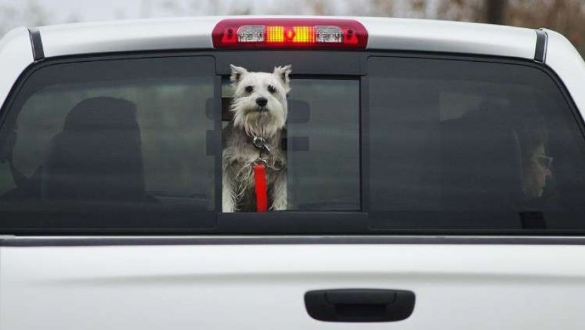 في بريطانيا.. كلب يخرج صاحبه من غيبوبته قبل فوات الأوان