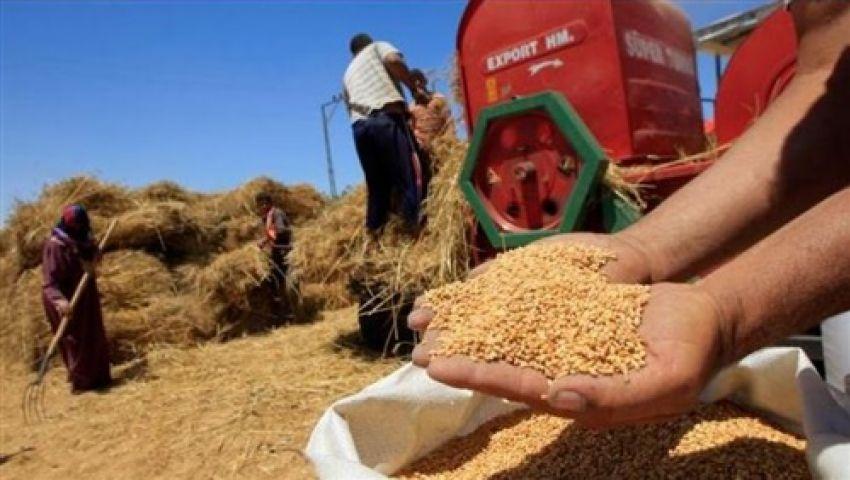 ارتفاع معدلات توريد القمح المحلى إلى مليون و930 ألف طن