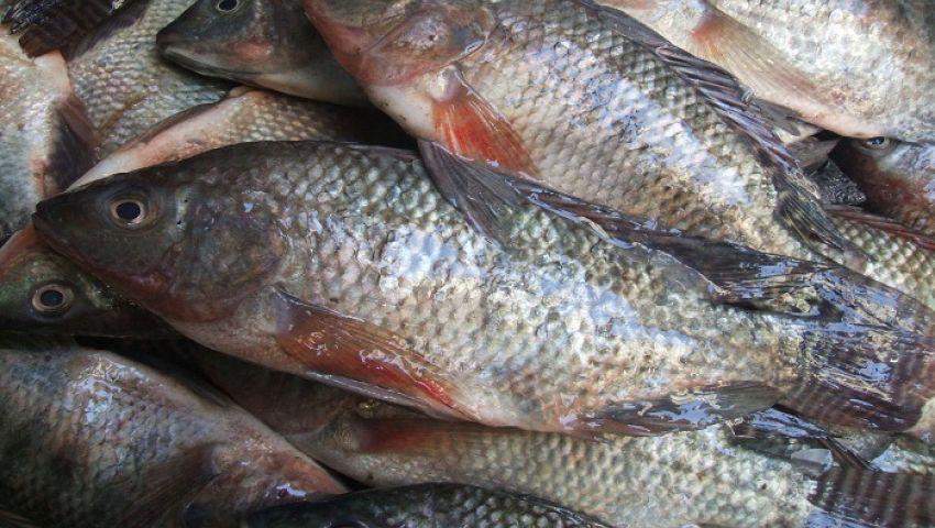 أسعار الأسماك اليوم الاثنين 27-3-2017