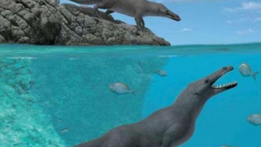 بيرو.. اكتشاف أحفورة حوت برمائي بأربعة أقدام