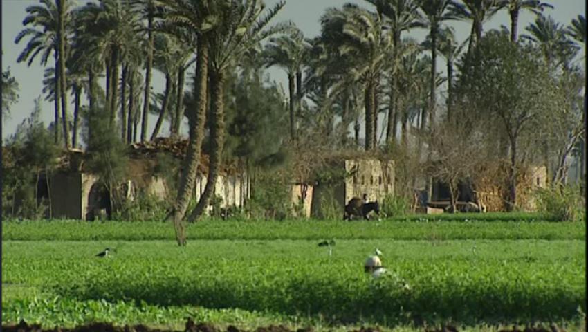 موقع ألماني:هكذا سيسير قطاع الزراعة في مصر السنوات المقبلة