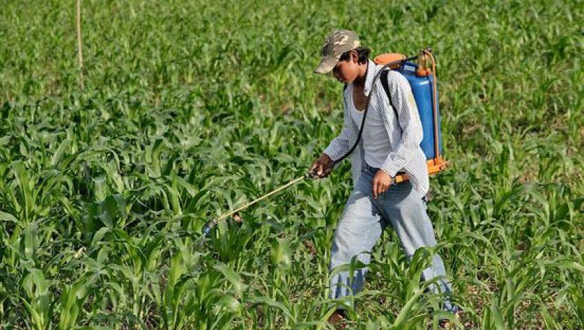 تعرف على خطة الزراعة لمكافحة القوارض لحماية الإنتاج الزراعي