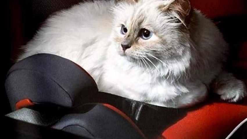 المتهمون بحرق قطة الغربية من غضب السوشيال ميديا لتحقيقات النيابة.. «القصة الكاملة»