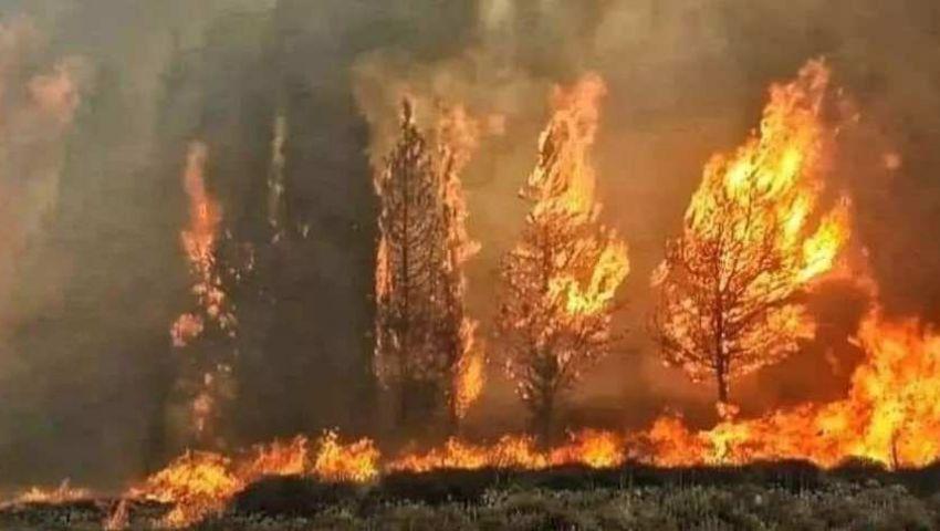 فيديو| لبنان تشتعل.. حرائق مرعبة تجتاح الغابات وتحاصر المنازل