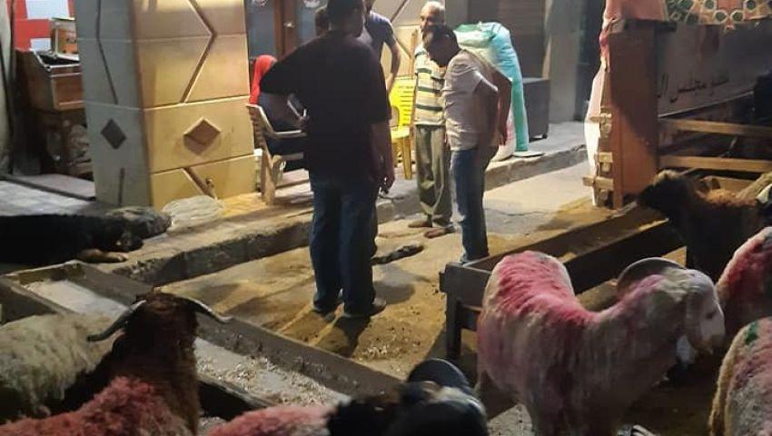 عيد الأضحى 2019| شوادر «الخراف» تغزو الإسكندرية.. والأهالي يشتكون (صور)