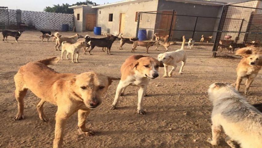 فيديو| لماذا حظرت الولايات المتحدة استيراد الكلاب من مصر؟