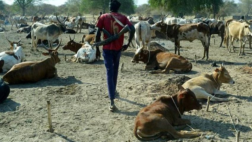 الفرنسية: في جنوب السودان.. حرب المواشي تغذي التوترات المسلحة