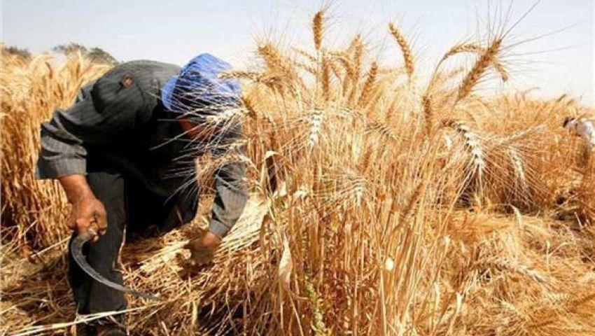 فيديو| بالمخزون الاستراتيجي.. كيف تجنبت مصر ارتفاع أسعار القمح عالميا؟